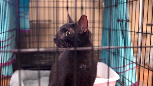 Кота, который выжил во Аваль доставили в приют