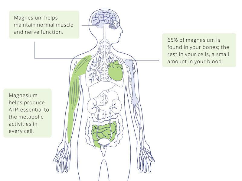 Для чего вашему организму нужен магний?