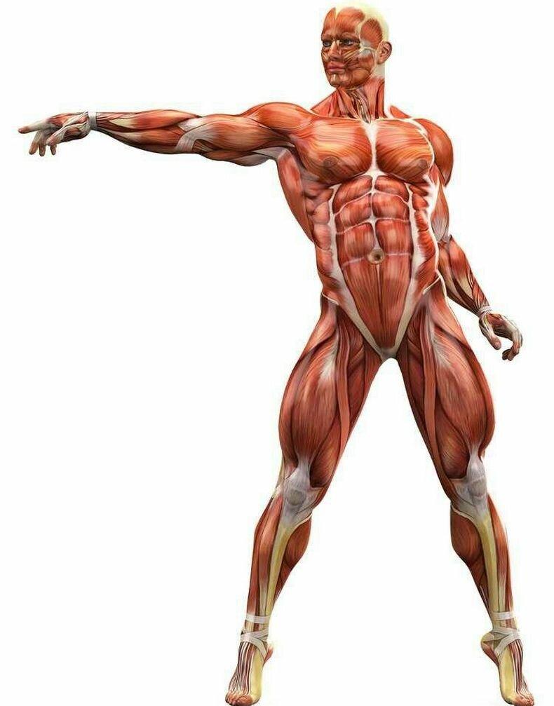 Упражнения, которые снимут мышечные зажимы и вернут психическое равновесие