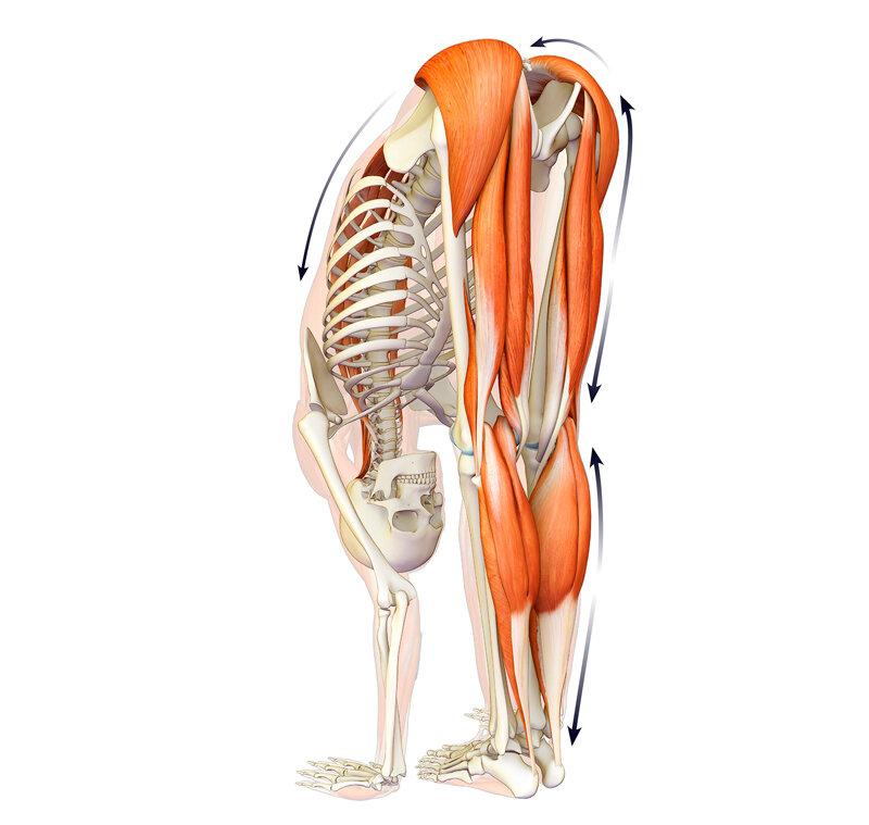 Иммунная гимнастика: 3 упражнения для поддержания здоровья и профилактики вирусных заболеваний