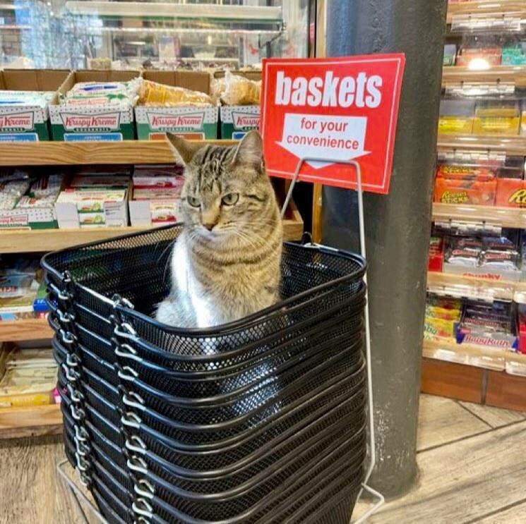 Кот выбрал удобное место для отдыха.