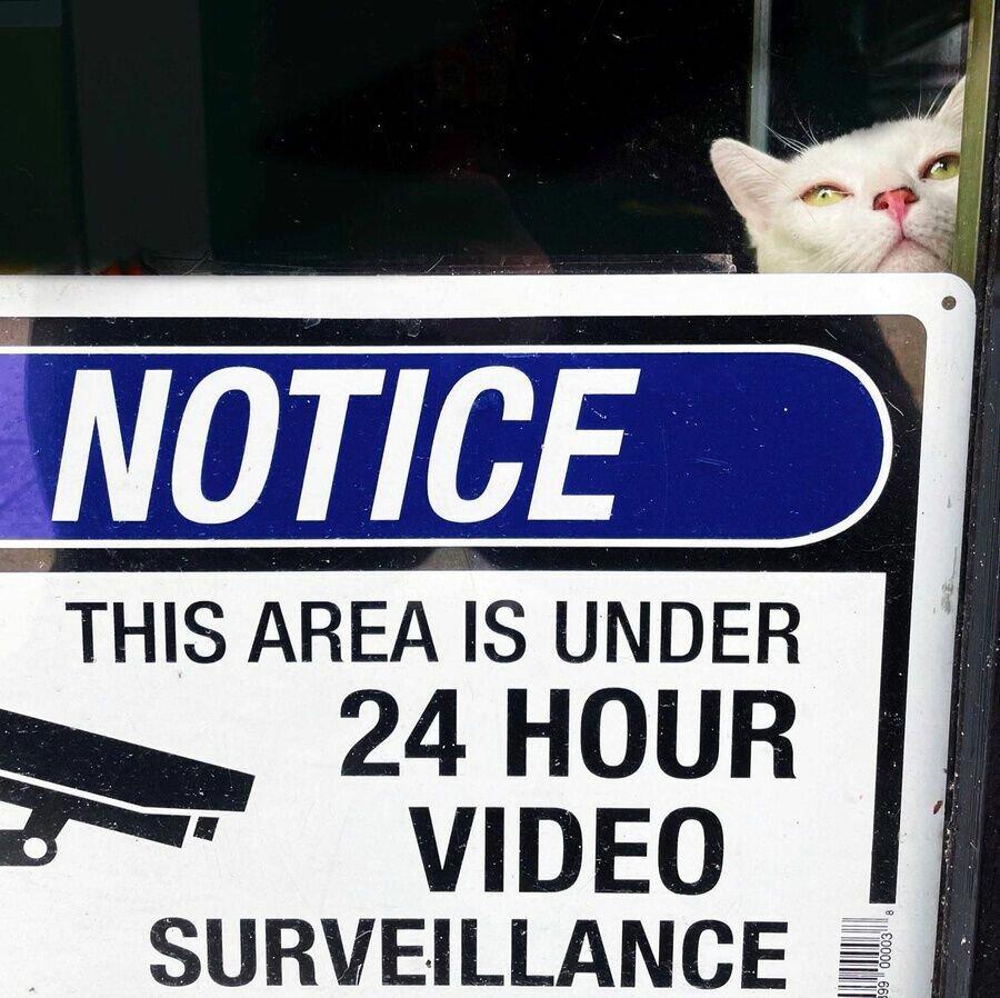 Охрана магазина производится 24/7.