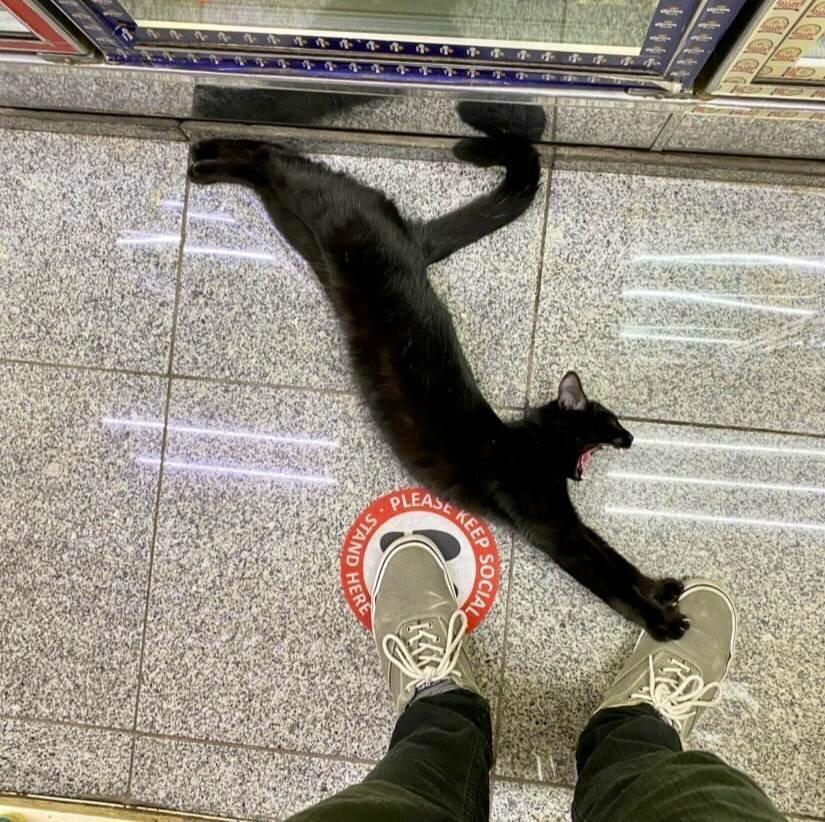 Кот призывает держать социальную дистанцию.