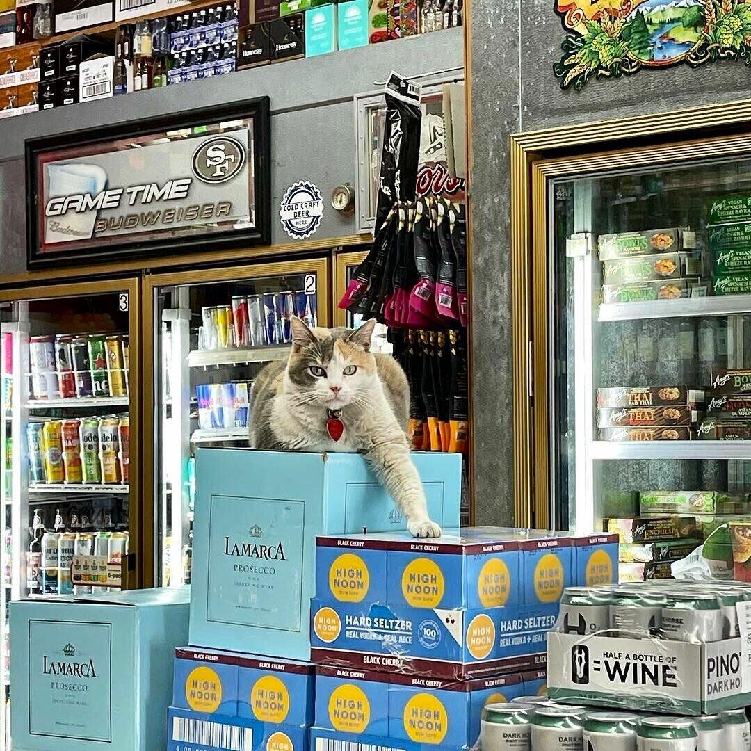 Кот охраняет спиртные напитки.