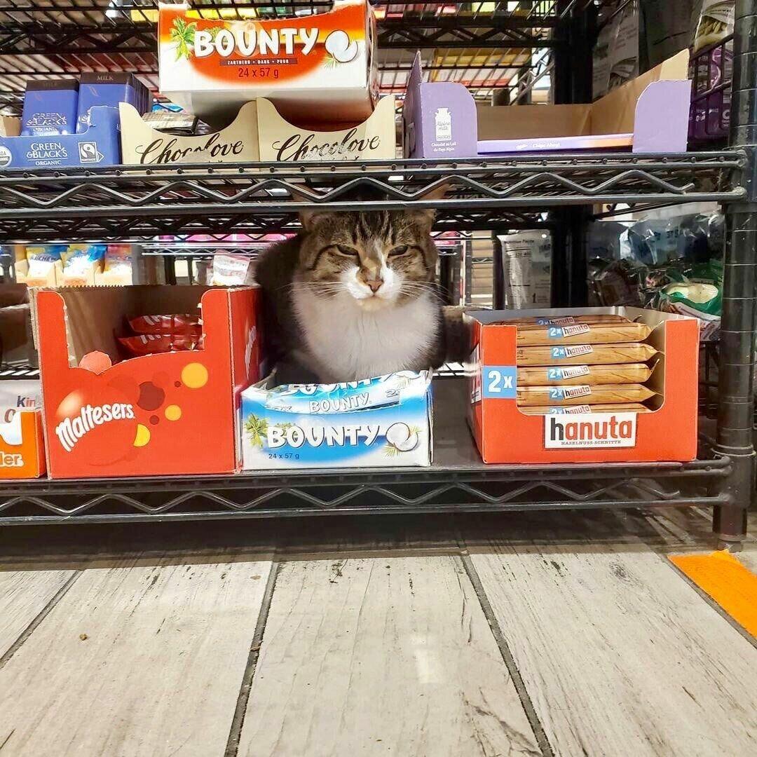 Эти конфеты – райское наслаждение даже для котиков.