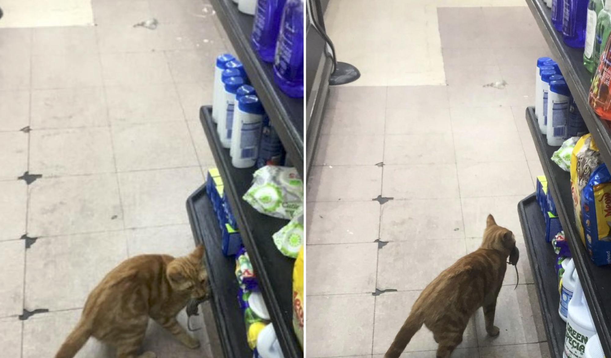 Кот контролирует, чтобы в магазине не воровали крупы.