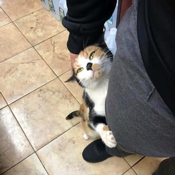 Кот просит купить лакомство.