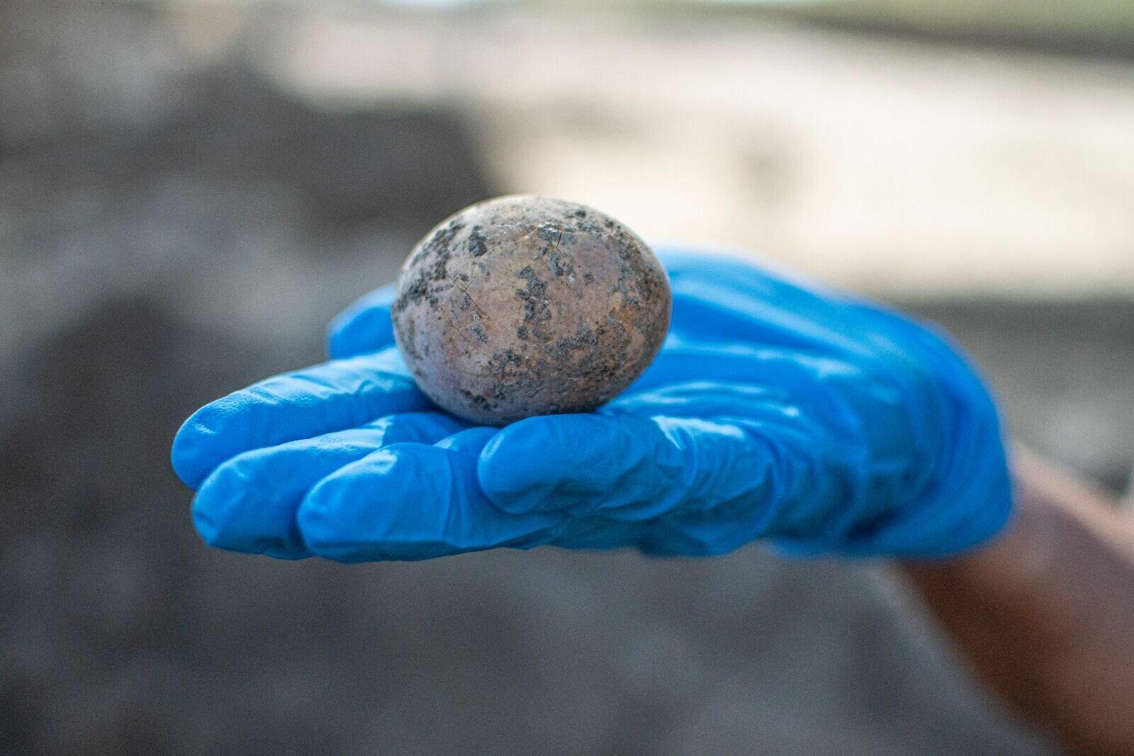 Тысячелетнее яйцо