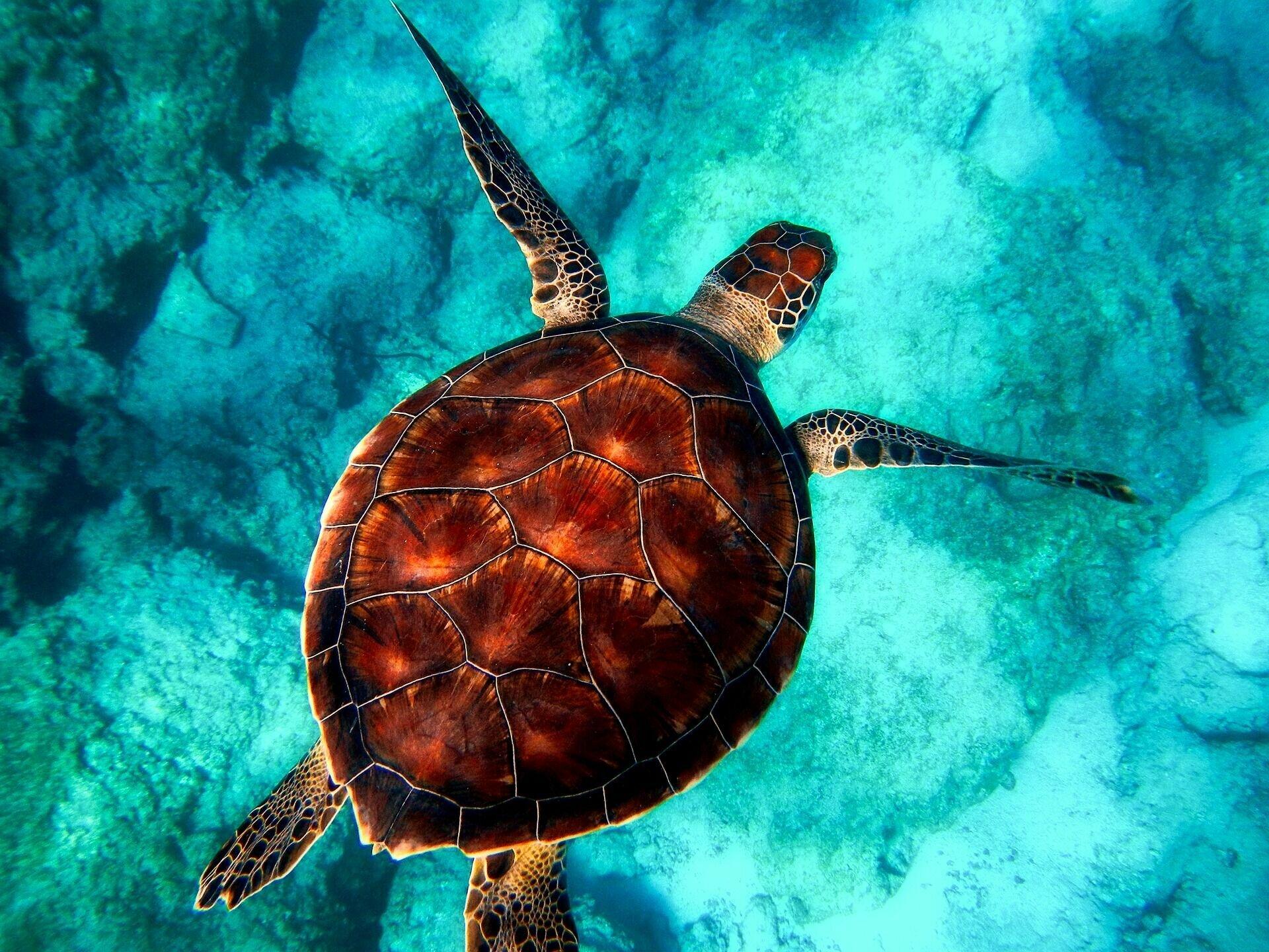 На Тихий океан приходится более половины всех растительных и животных организмов Мирового океана