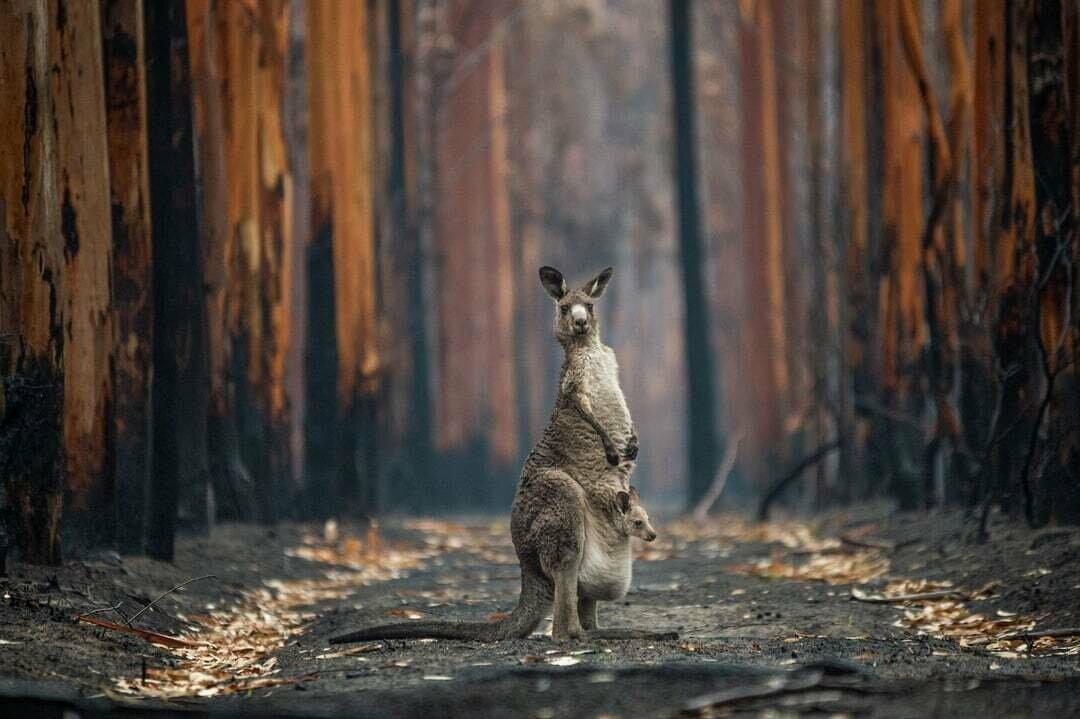 """Фото """"Надежда на сожженной плантации"""", автор Джо-Энн Макартур (Австралия)."""