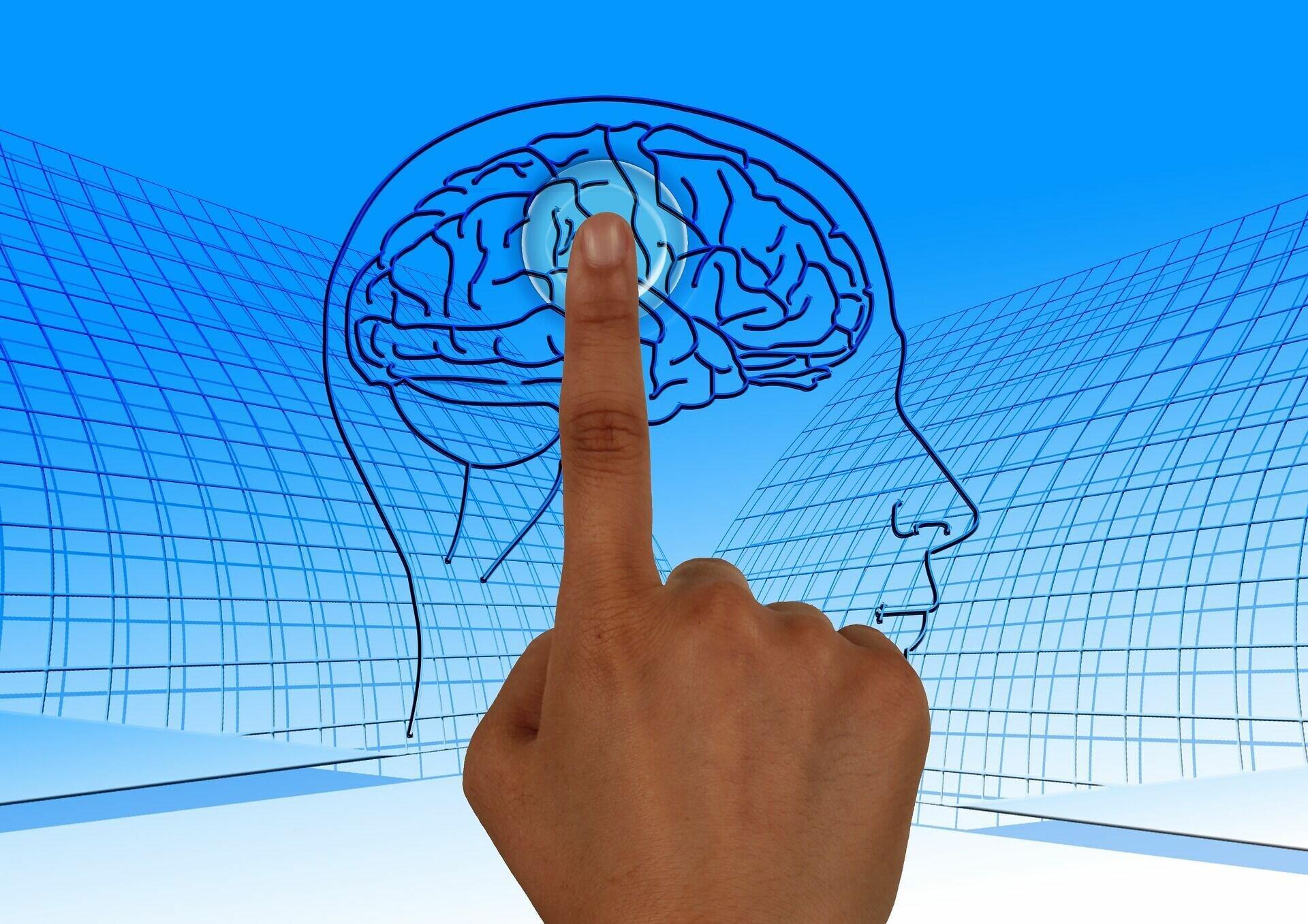 Память мозга практически не ограничена