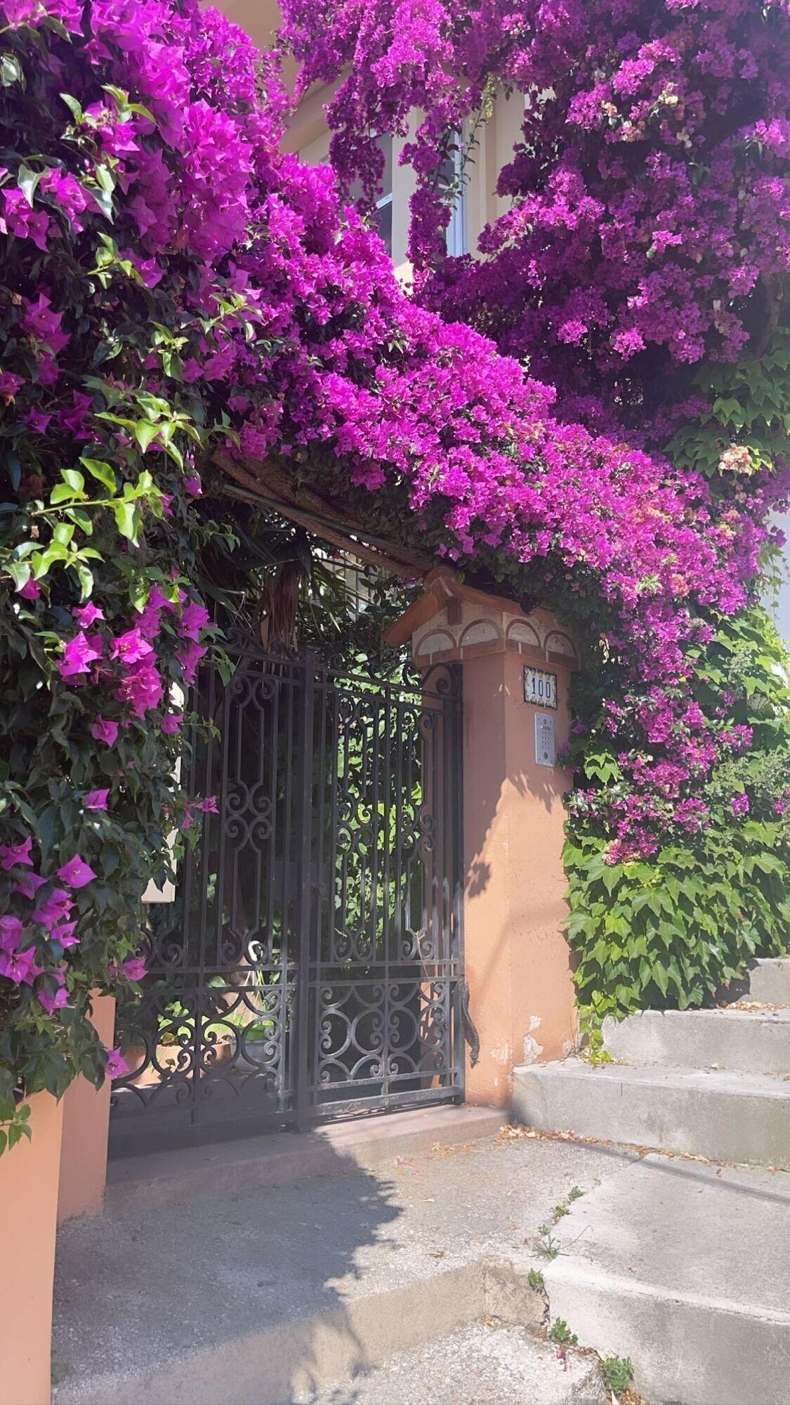 Квіти в Монако