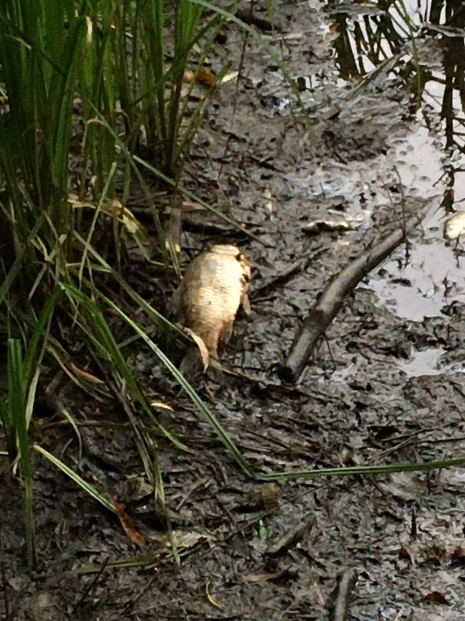 На прудах в Киеве массово погибли утки и рыба: что произошло (фото)