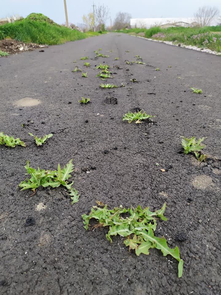 Под Никополем на новой дороге из-под асфальта начала расти трава: фото шокировало сеть