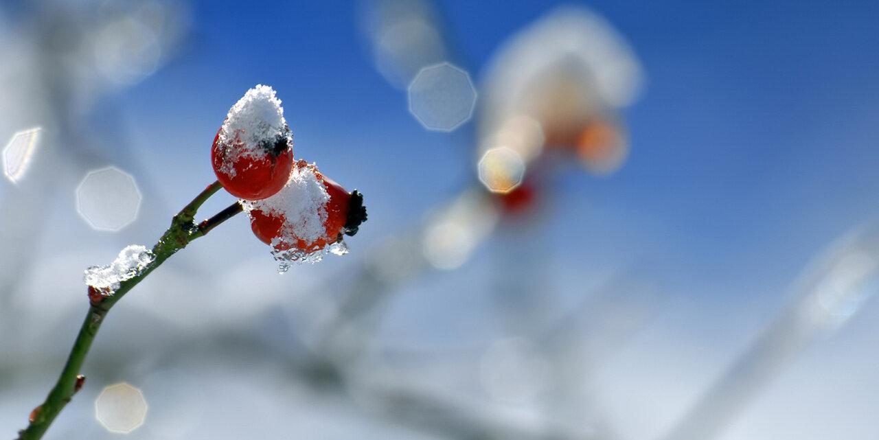 Святой Андрей и милосердие: какой сегодня праздник и день ангела 13 декабря - фото 4