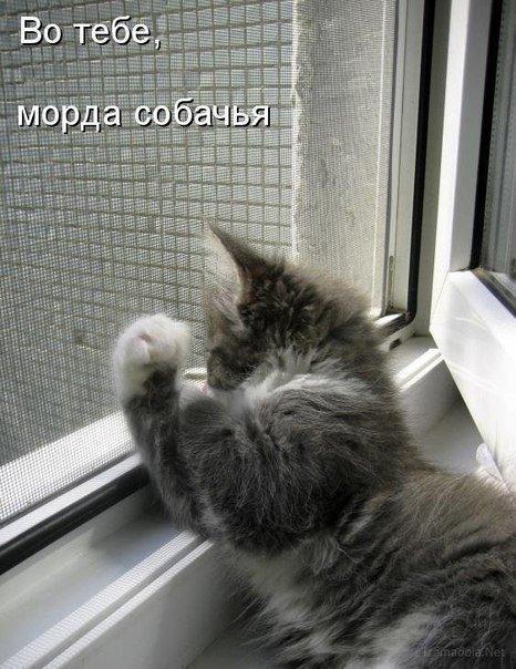 post-15073-0-61077800-1450709405_thumb.j