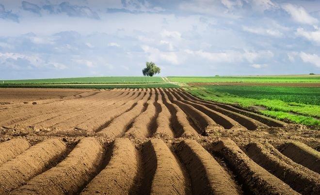 Рынок земли в Украине: как идет подготовка к запуску