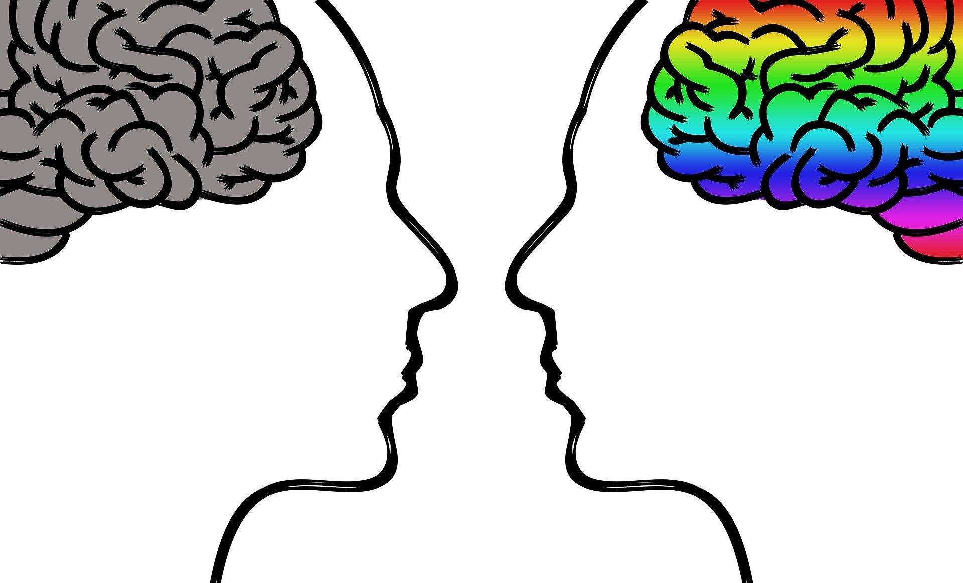 Интересные факты о верхнем и нижнем мозге