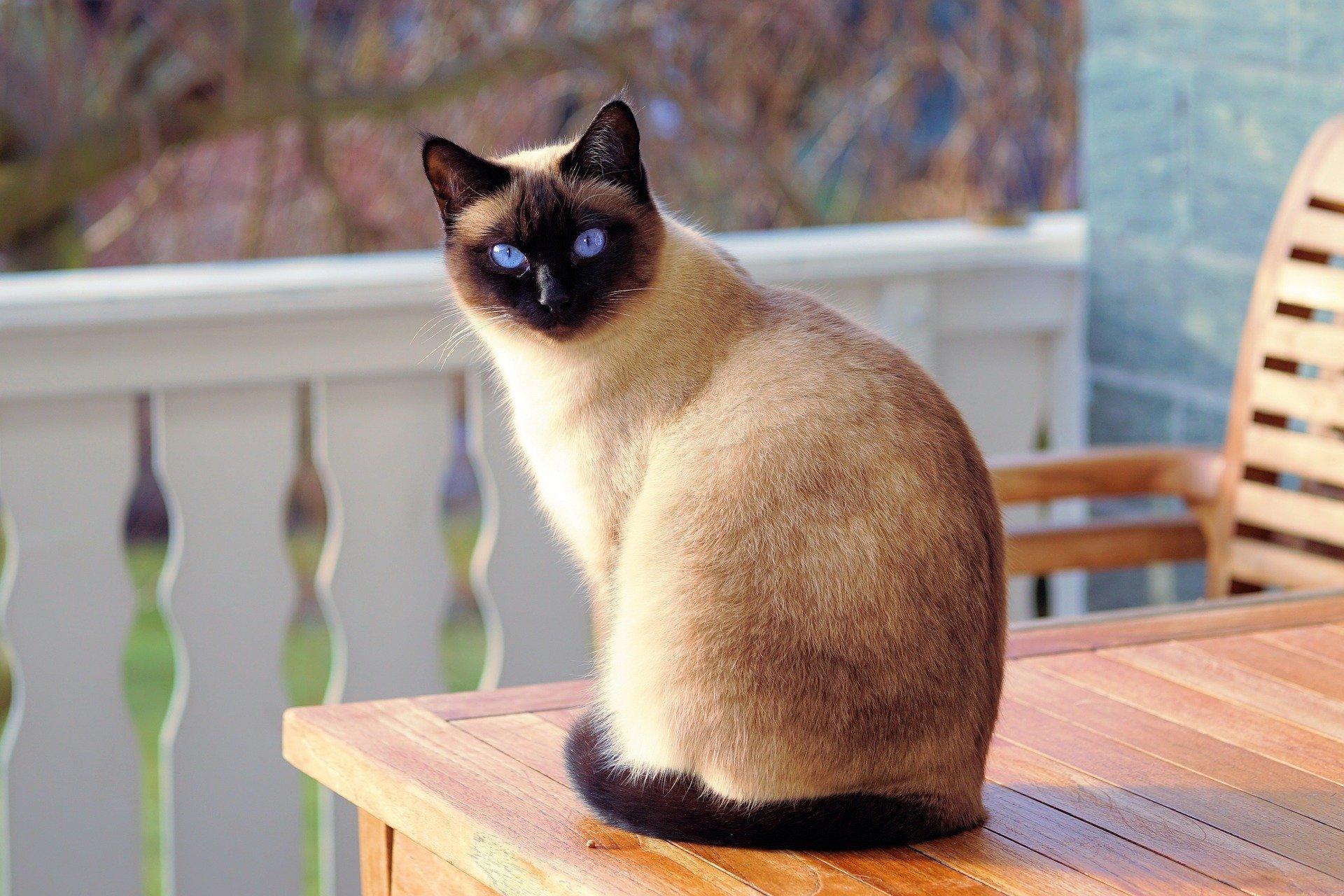 "Кошки бывают ""тихими"" хозяевами COVID-19"