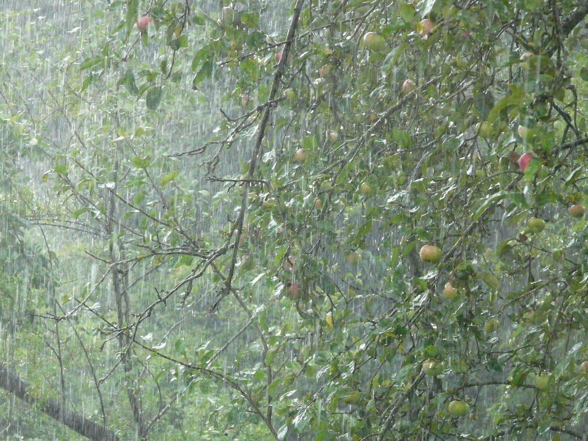 Синоптики обещают дожди и грозы