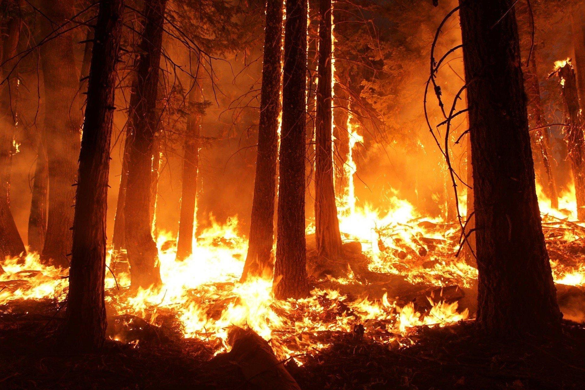 Пожары в США: 6 млн. человек в зоне риска