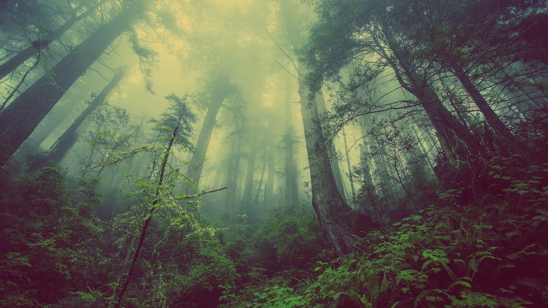 Планета теряет тропические леса