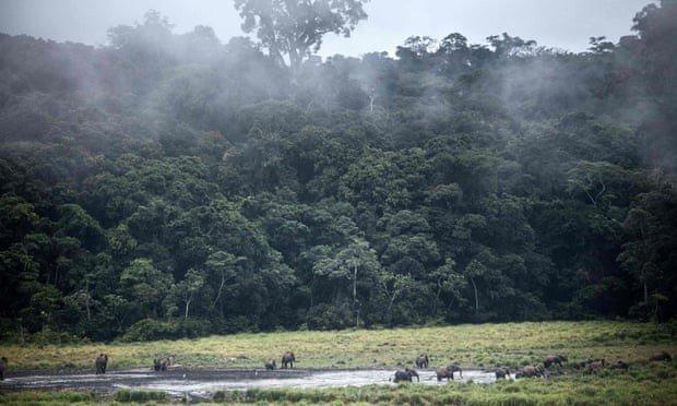 Сухі тропічні ліси знаходяться під загрозою