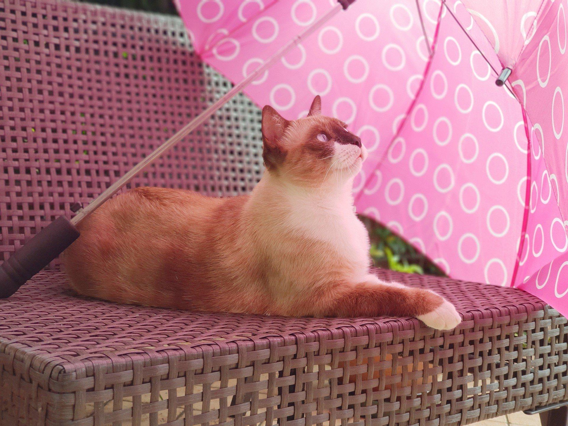 Синоптики предупредили об ухудшении погоды