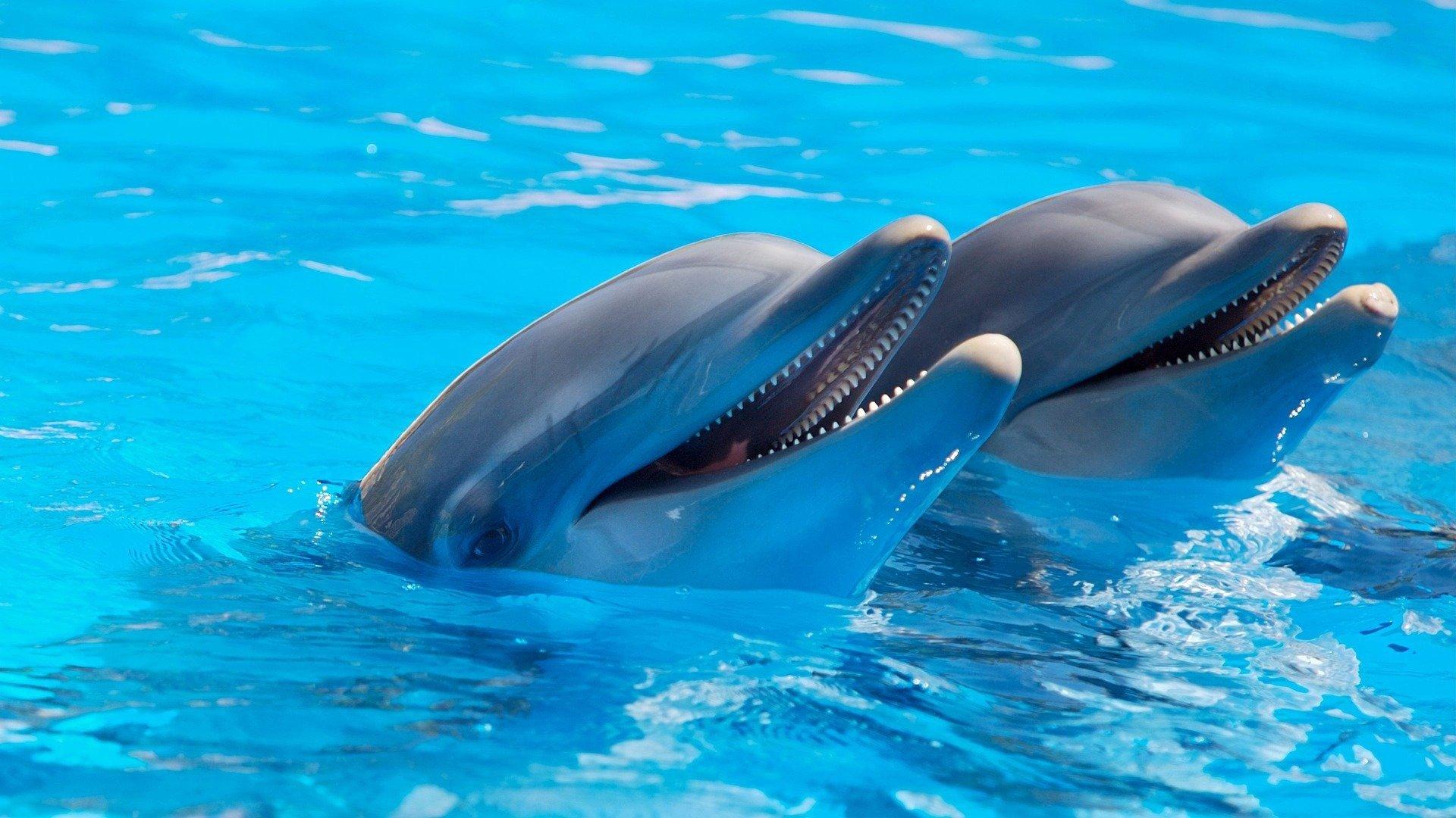 На Бали спасают дельфинов
