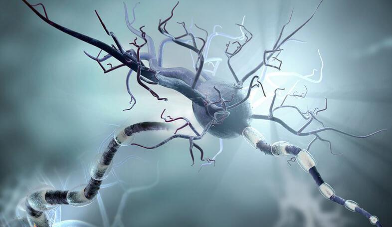 Взаимосвязь микрофлоры и аутоиммунных заболеваний