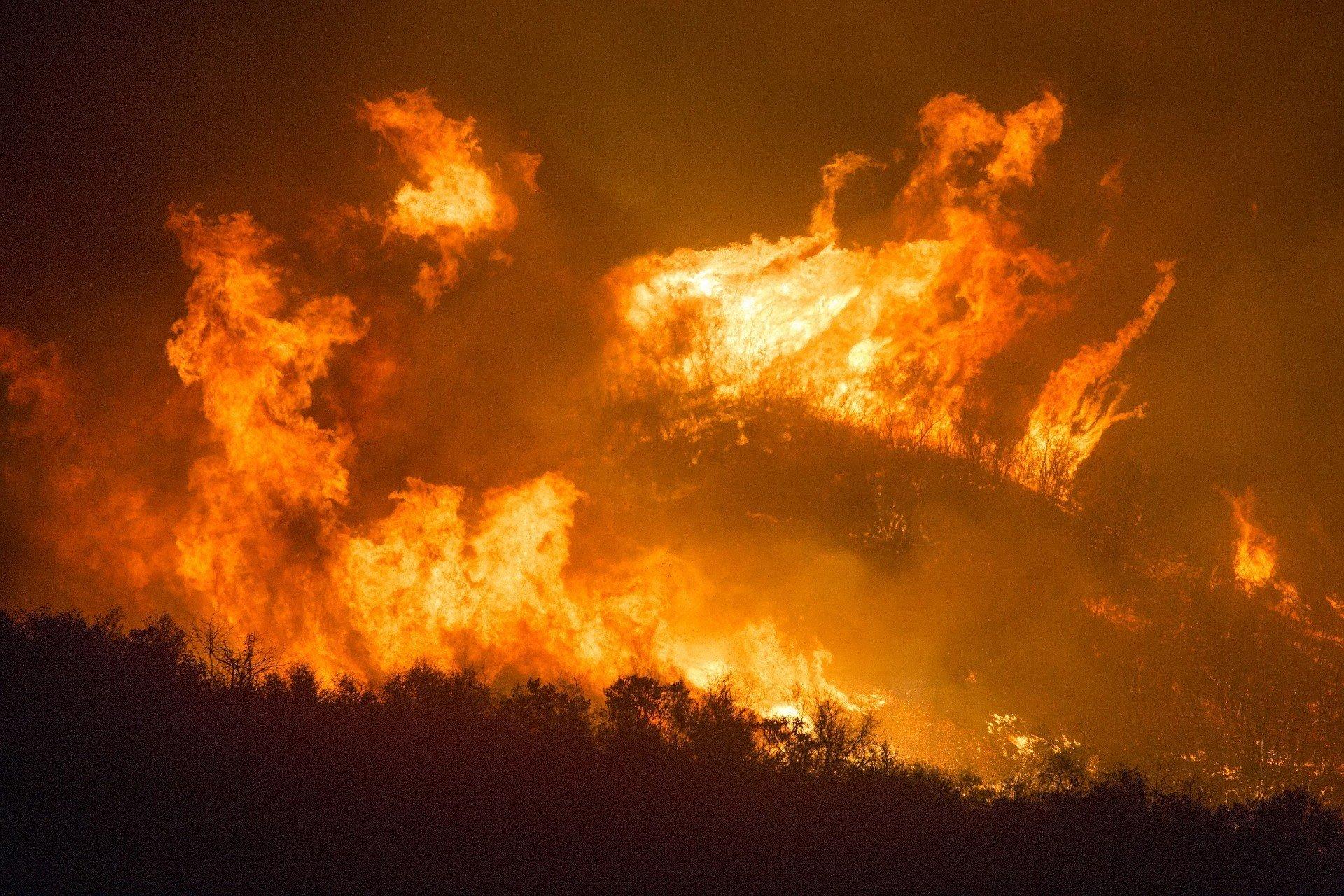 Пожары уничтожили более 40% острова, охраняемого ЮНЕСКО