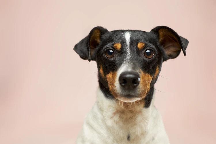 У власників собак вище ризик заразитися