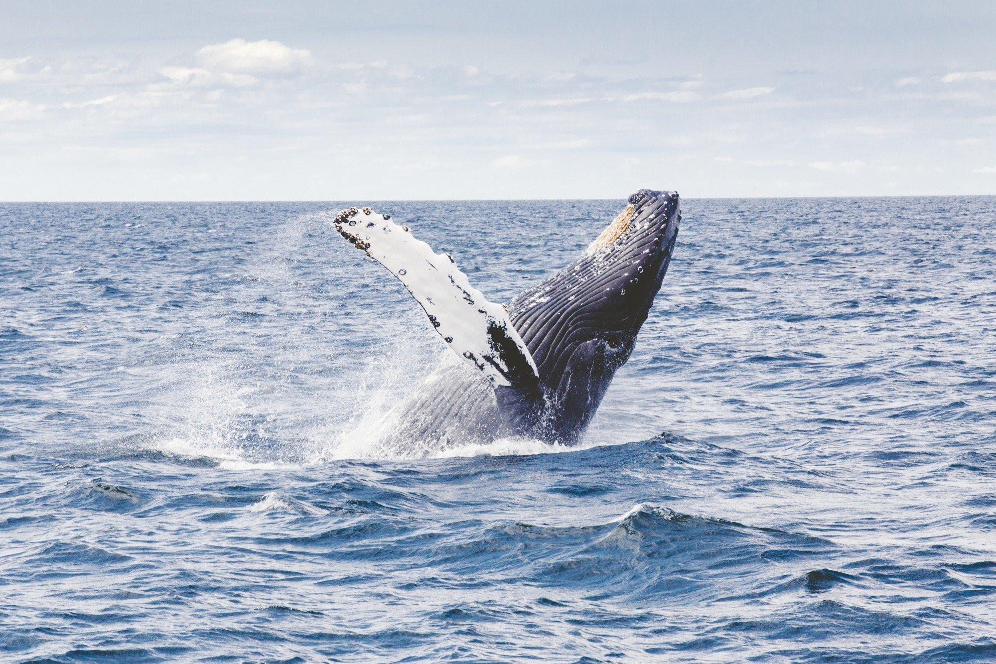 Обнаружен скелет кита возрастом в несколько тыс лет