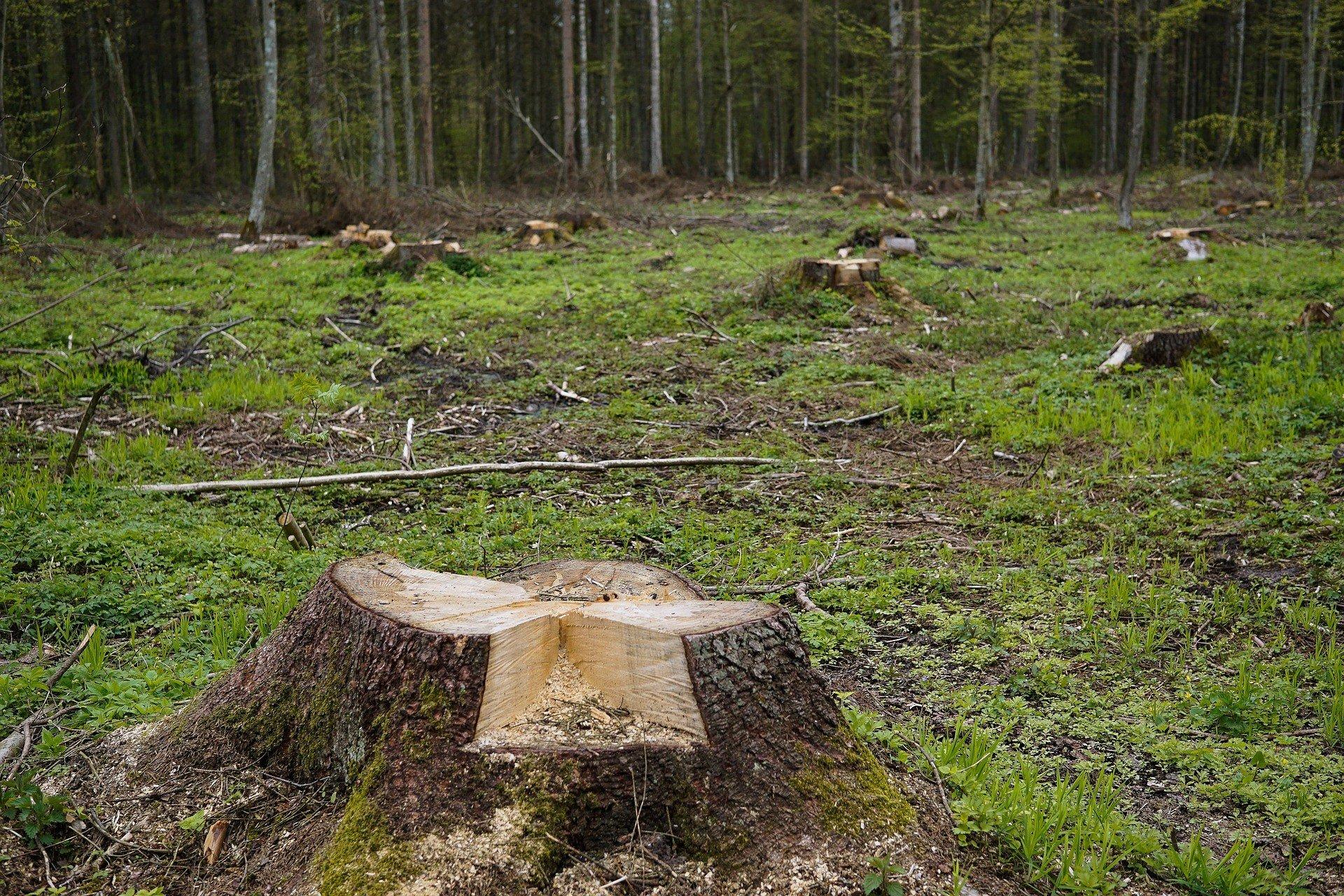 Вырубка лесов несет большую опасность Прикарпатью