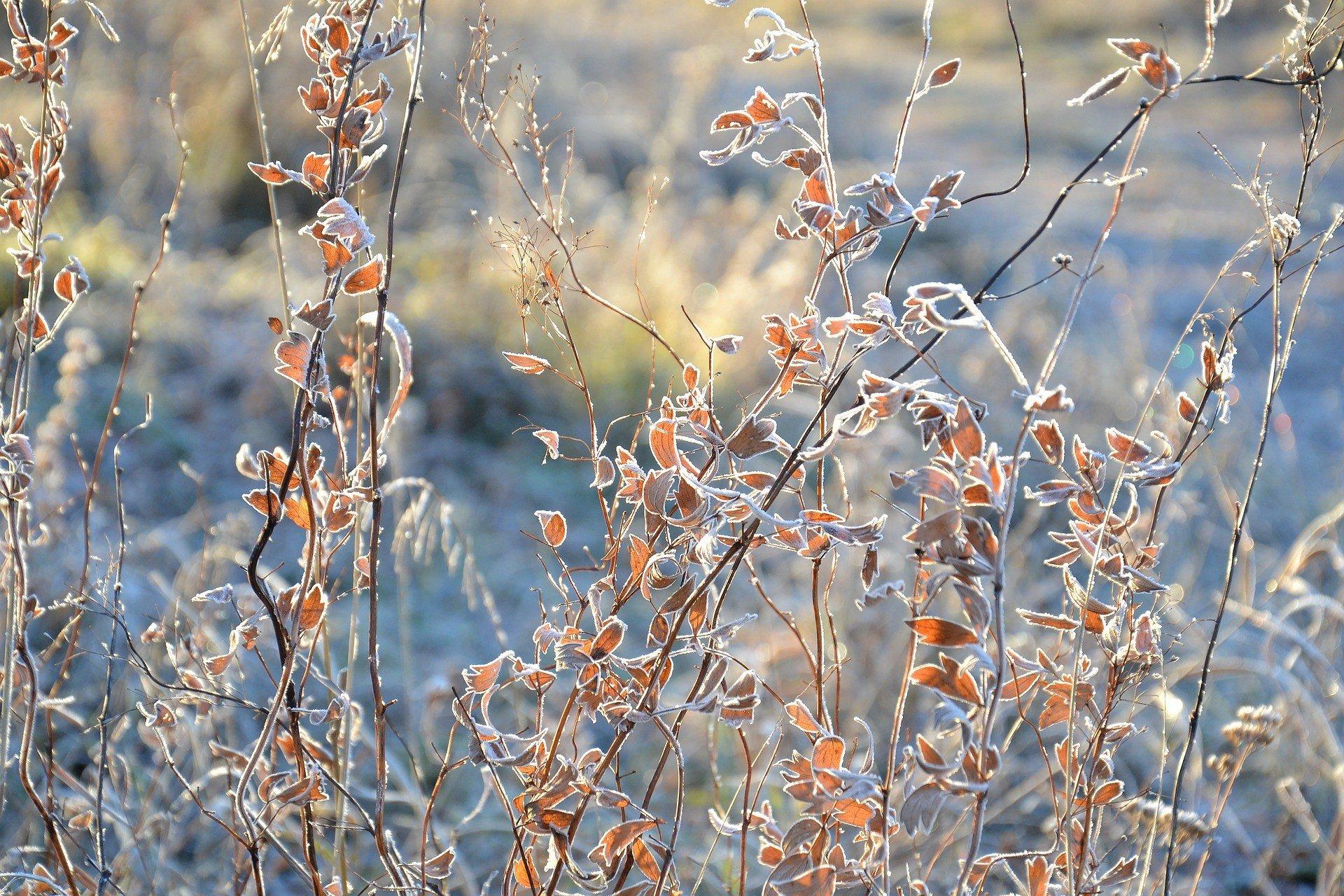 Зима близко: синоптик предупредила о дальнейшем похолодании