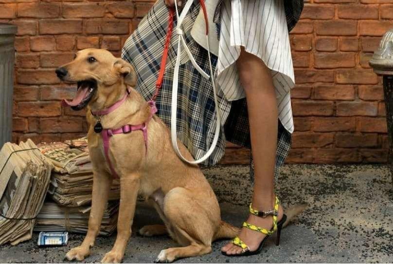 Бездомная собака из Запорожья стала моделью в Vogue