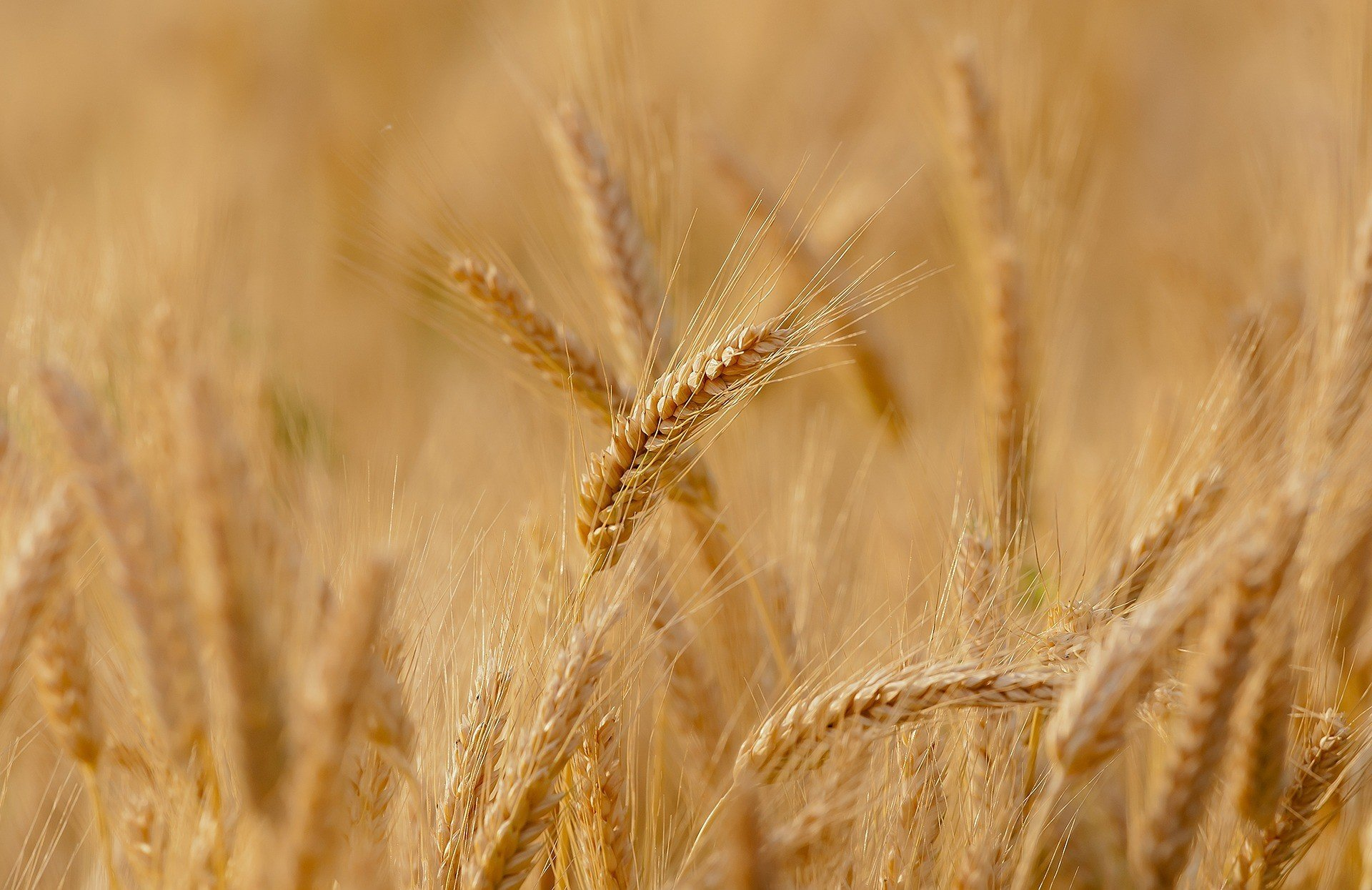 Последствия снижения ставки НДС для аграриев