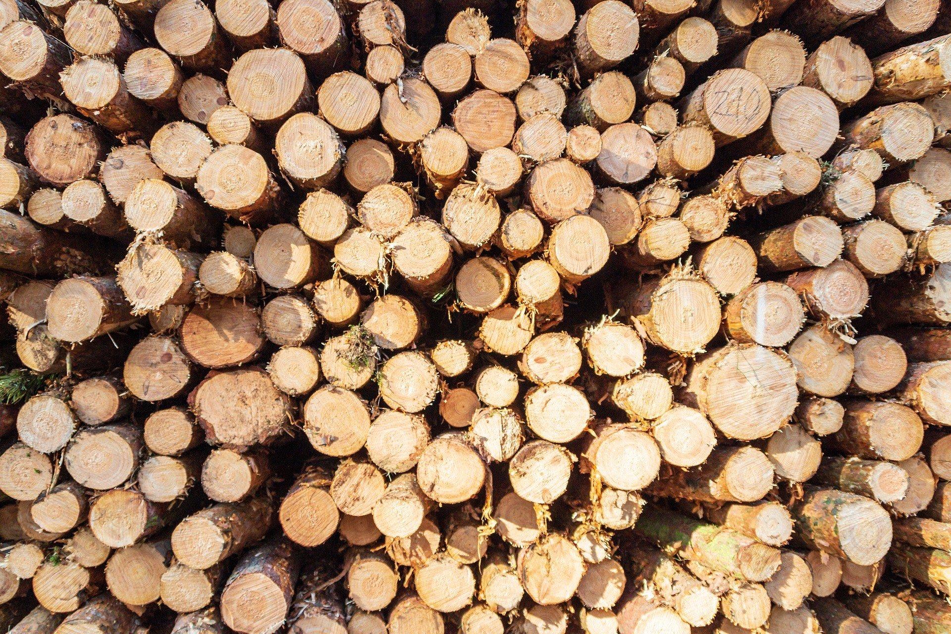 Вырубка лесов в Бразилии достигла пика за последние 12 лет