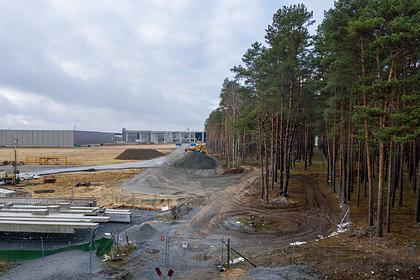 В Германии разрешили Tesla вырубить лес ради завода