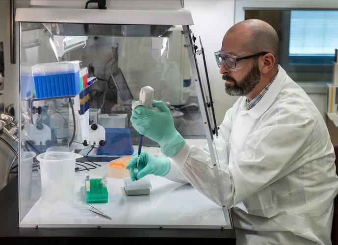 Ученые вырастили ткань печени человека за 17 дней