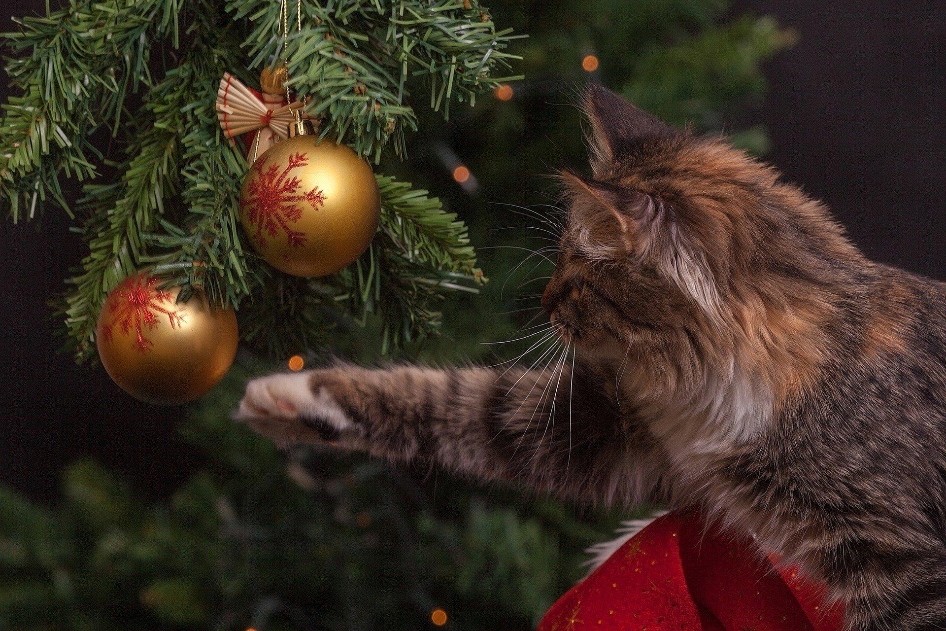 Сколько будет стоить новогодняя елка
