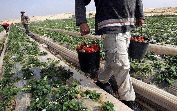 В ЕС резко увеличился спрос на рабочих из Украины