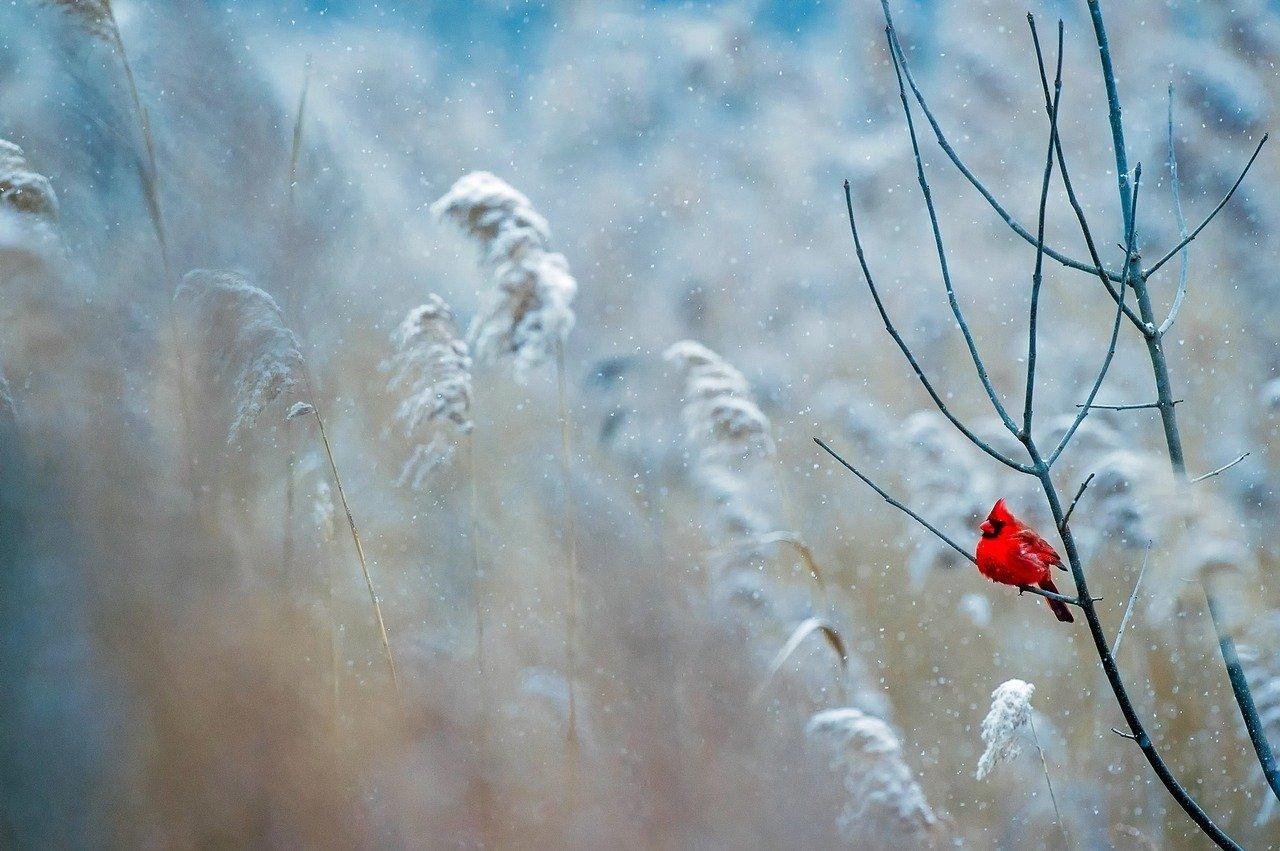 14 декабря: какой сегодня праздник и что нельзя делать
