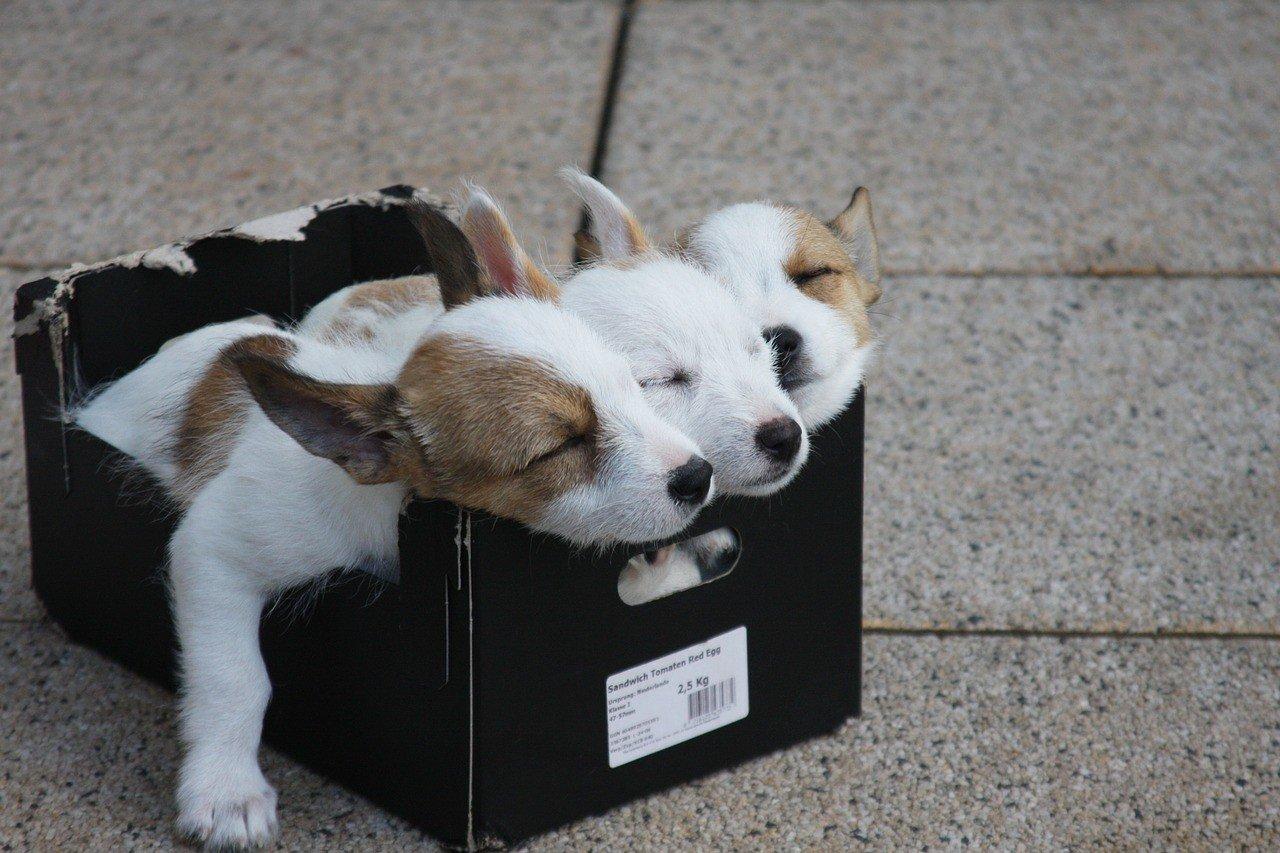 Маленькие забавные щенки редких пород