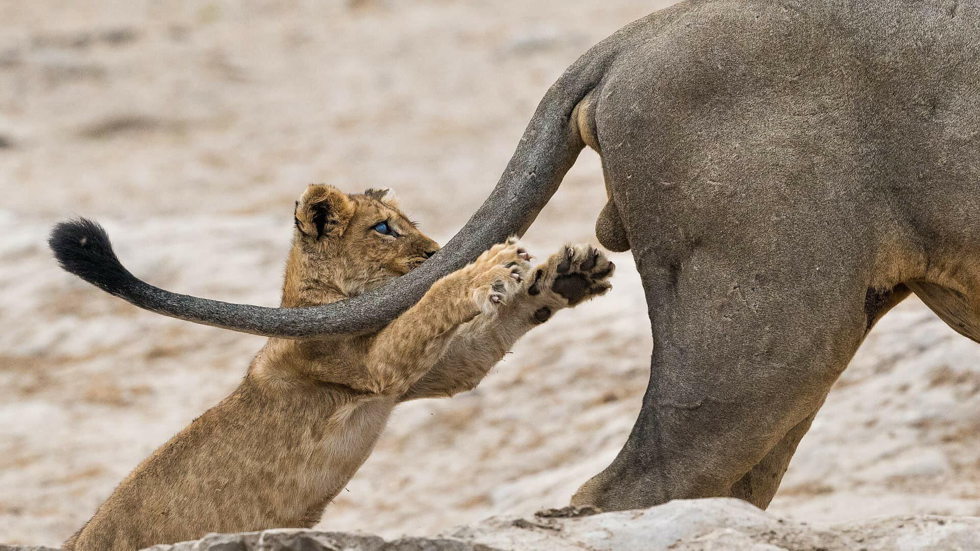 Лучшие комедийные фотографии дикой природы