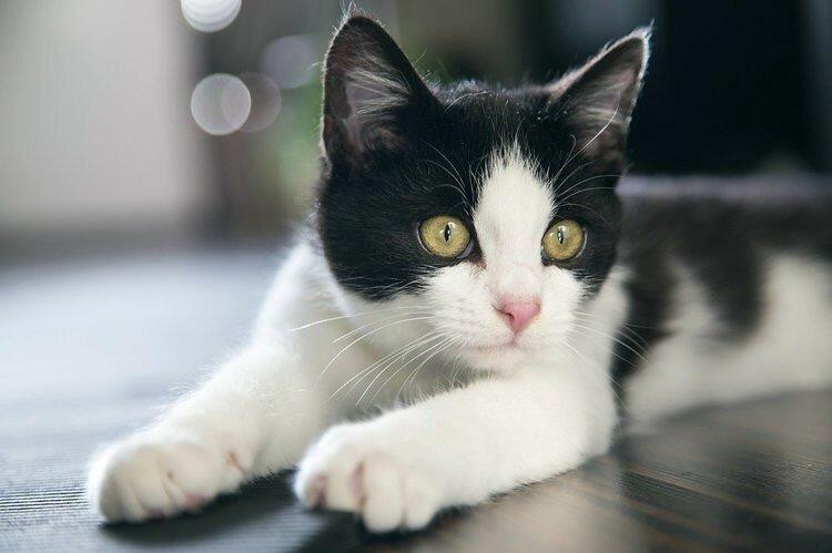 В Дубае открыли роскошный кошачий отель