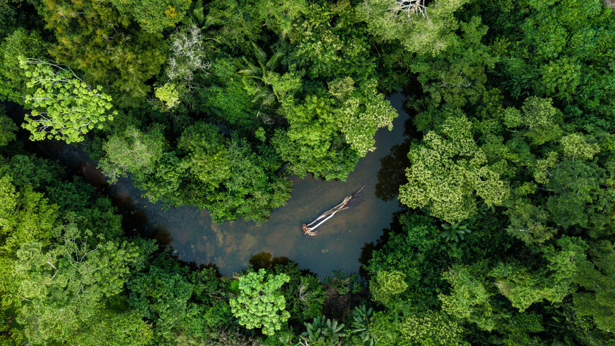 """Амазонка почала """"нагрівати"""" планету"""