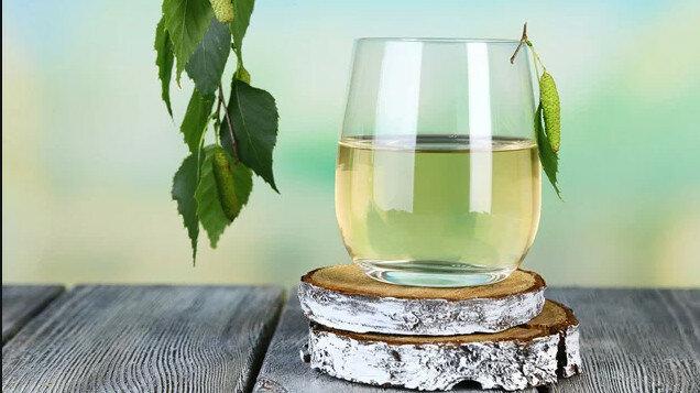 Полезные свойства березового сока для здоровья