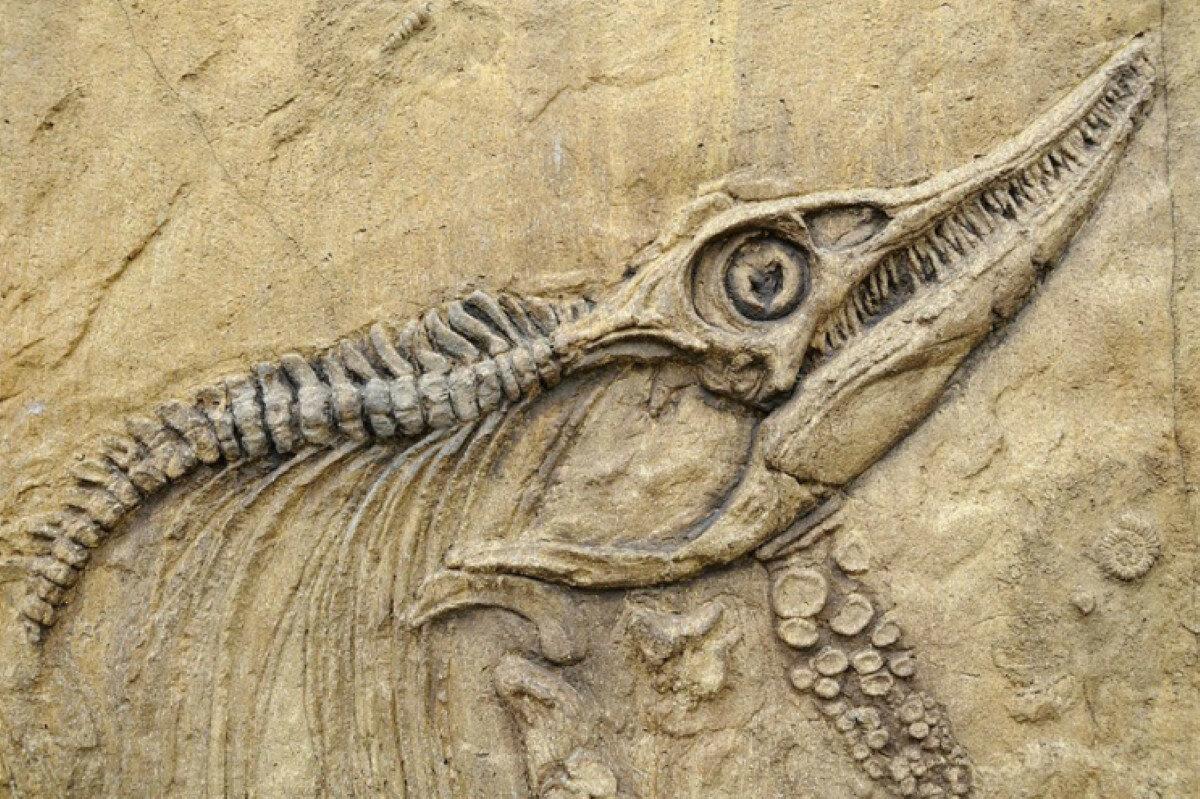 Обнаружено два новых вида древних предков роющих млекопитающих