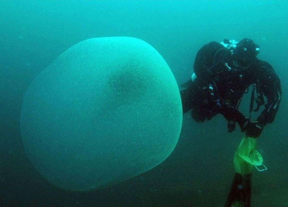 Раскрыта загадка гигантских студенистых сфер из Атлантики